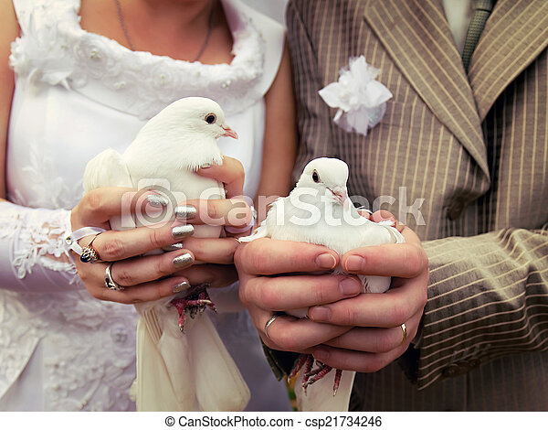 Wedding doves close-up in the hands of the bride and groom - csp21734246