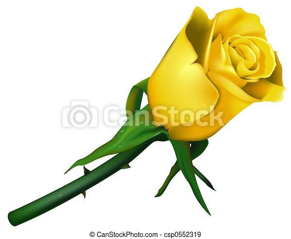 Wedding Rose Yellow - csp0552319