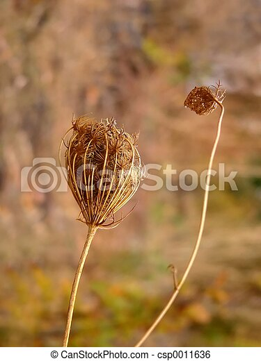 weed - csp0011636