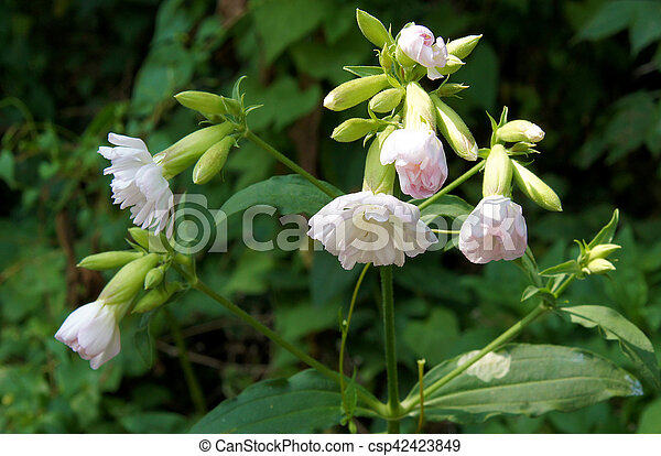 Weed with pale pink flowers weed with beautiful fresh pale pink weed with pale pink flowers csp42423849 mightylinksfo