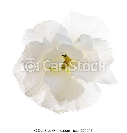 Isolierte weiße Blume - csp1321207