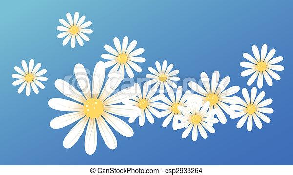 Weiße blume, gänseblumen. Blauer hintergrund, gänseblumen, weisse ...