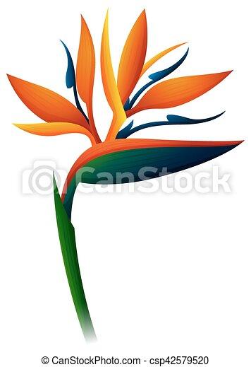 Weiße blume, vogel, hintergrund, paradies. Blume, abbildung ...