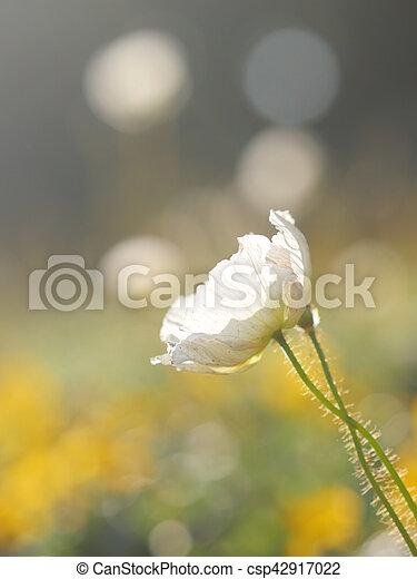 Blumenweißwiese - csp42917022