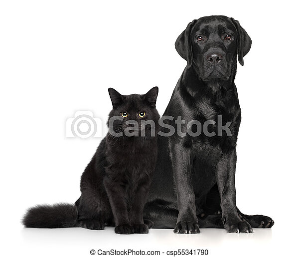Weißer Hund Zusammen Katz Hund Zusammen Katz Themen