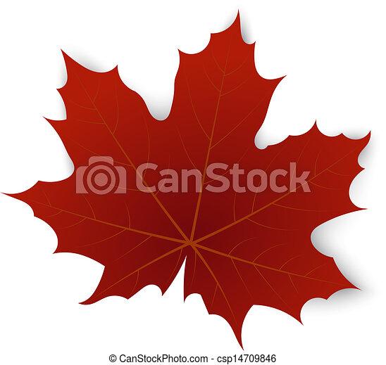 Rotes Ahornblatt auf weißem Hintergrund - csp14709846