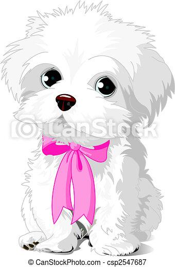 weißes, junger hund - csp2547687