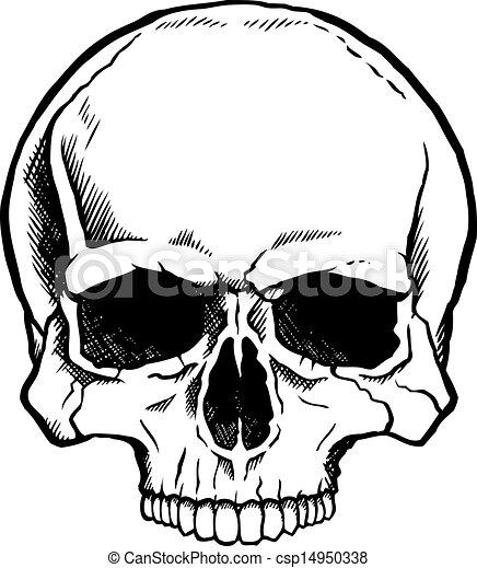 Schwarz-weißer menschlicher Schädel - csp14950338