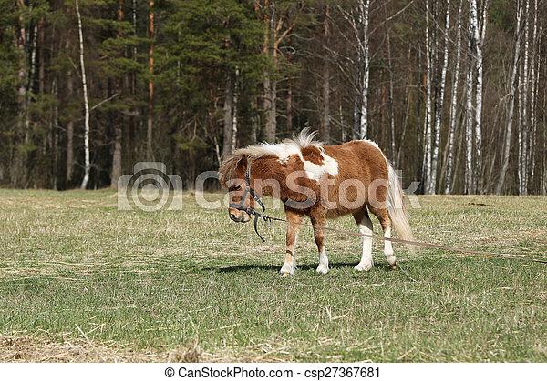 Pony auf der Weide - csp27367681