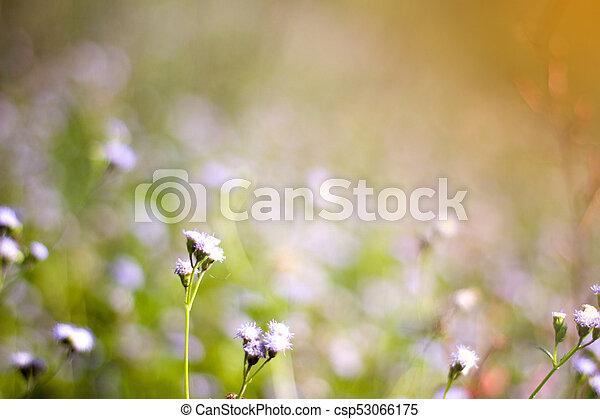 Weisse blumen, gras, hintergrund, verwischt Bild - Suche Foto ...