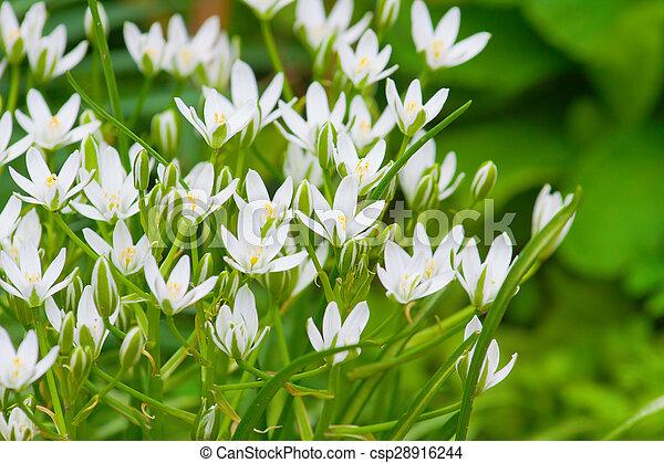 Weisse blumen, kleingarten. Weisse blumen, sonnig,... Stockfoto ...