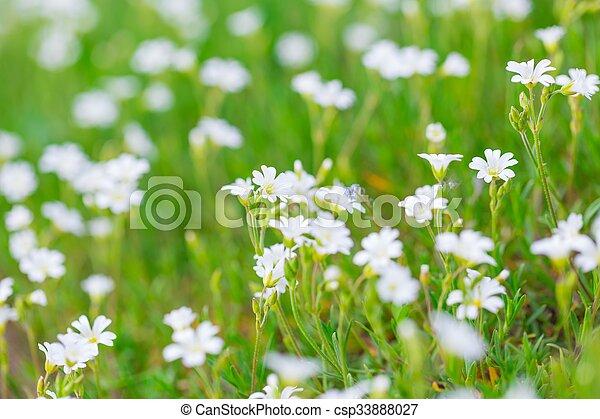 Weise Blumen. Beautiful Vase Und Weie Blumen With Weise Blumen. Free ...