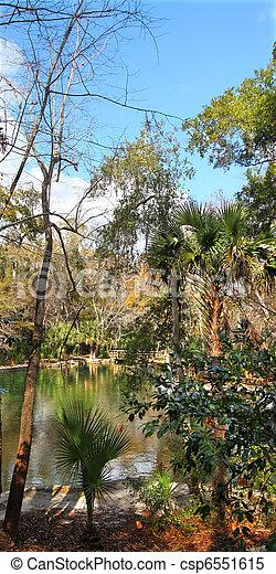 Wekiwa Springs in Florida - csp6551615