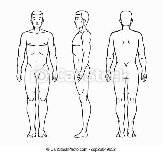 wektor, samiec, ilustracja, ciało - csp26849652