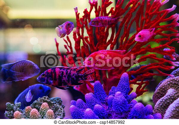 Welt fische salzwasser aquarium bunte stockfotos for Salzwasser aquarium fische