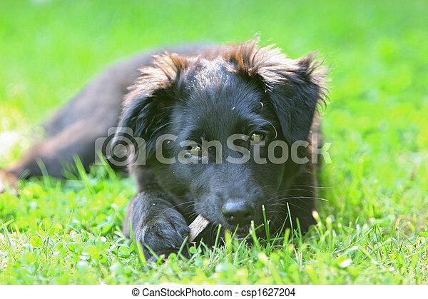 wenig, hund - csp1627204