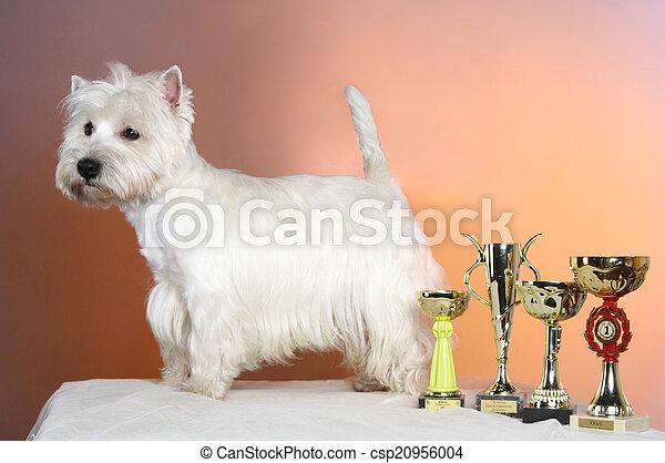 West highland white terrier - csp20956004