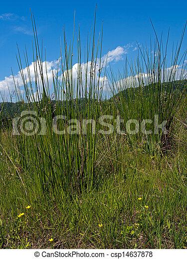 Wet grassland, pasture nature, agriculture background - csp14637878