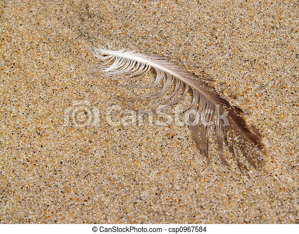 Wet Gull Feather on Beach - csp0967584