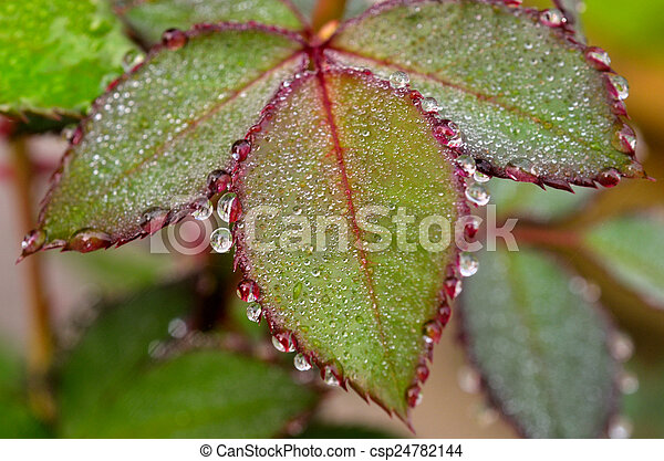 wet leaves - csp24782144