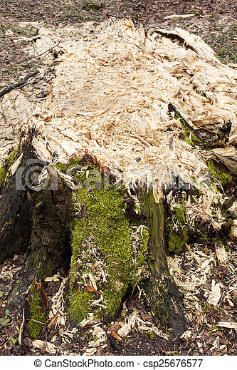 Wet rotting tree trunk - csp25676577