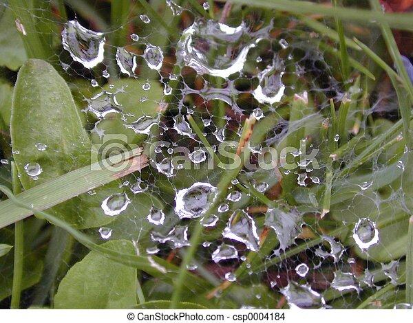 Wet web - csp0004184