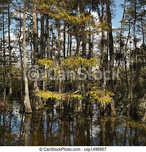Wetland, Florida Everglades. - csp1498957