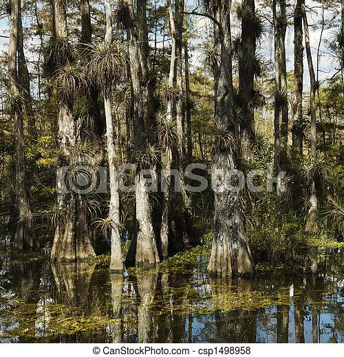 Wetland, Florida Everglades. - csp1498958