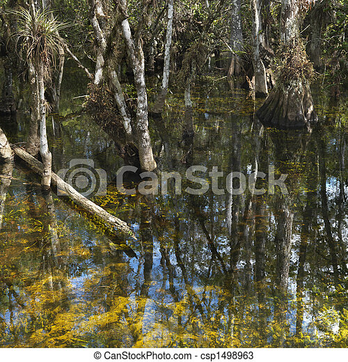 Wetland, Florida Everglades. - csp1498963