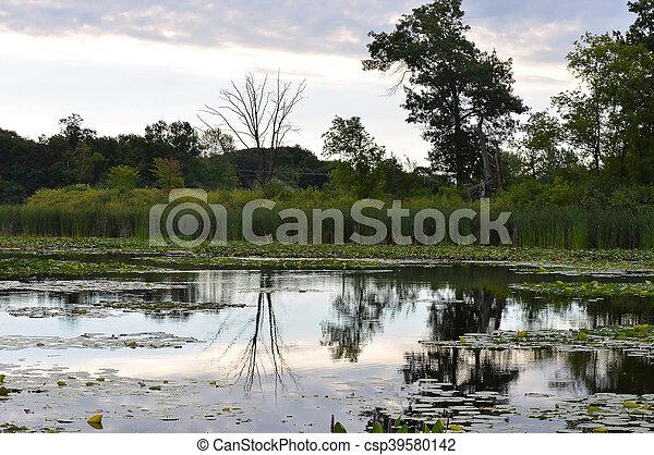 wetland - csp39580142