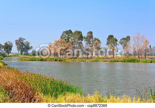 wetland - csp8872369
