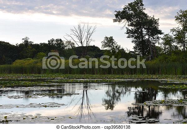 wetland - csp39580138