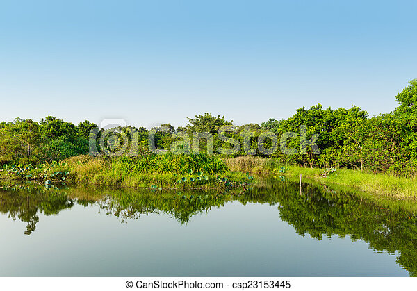 Wetland with blue sky - csp23153445