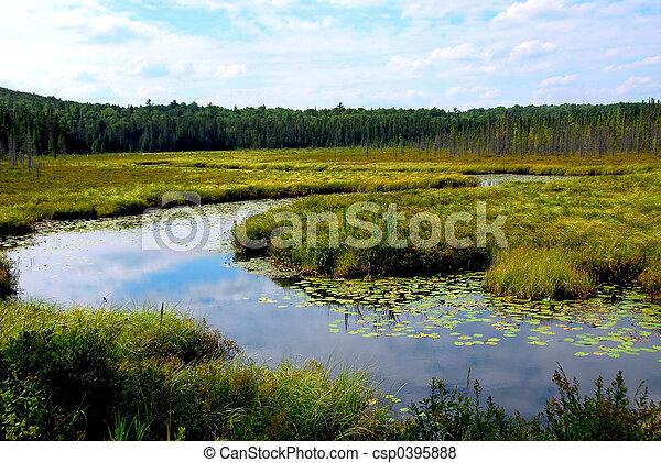 Wetlands - csp0395888