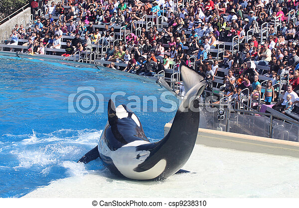 Whale Performing - csp9238310