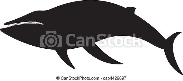 Whale vector - csp4429697