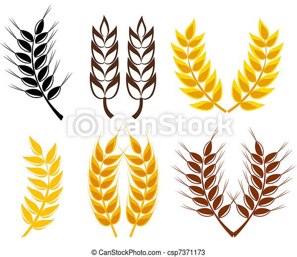 Wheat and rye ears - csp7371173