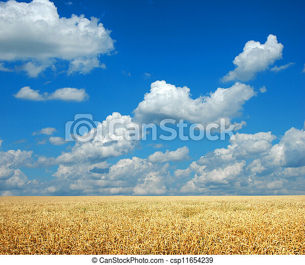 Wheat and Sky - csp11654239