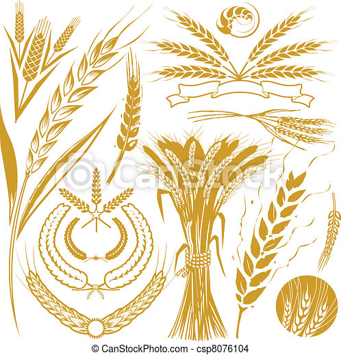 Wheat Collection - csp8076104