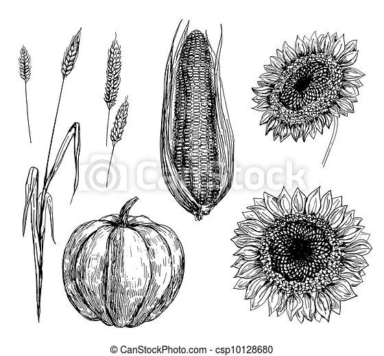 wheat, corn, pumpkin and sunflowers - csp10128680