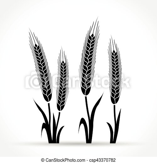 wheat design on white background - csp43370782