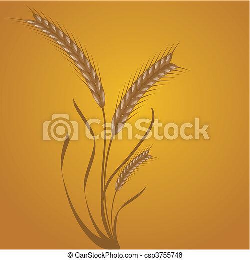 wheat ears - csp3755748