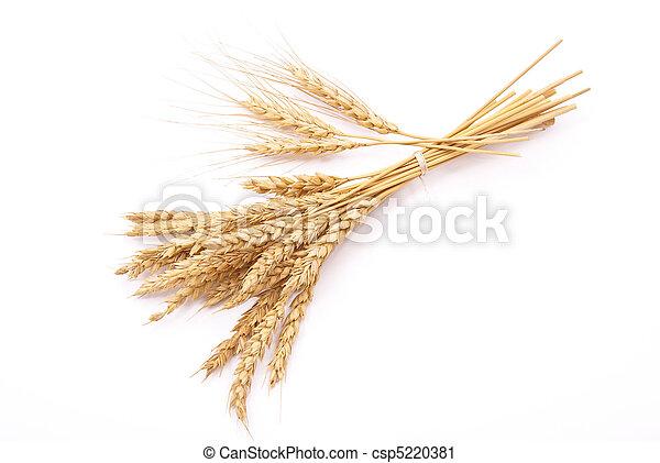 Wheat ears  - csp5220381