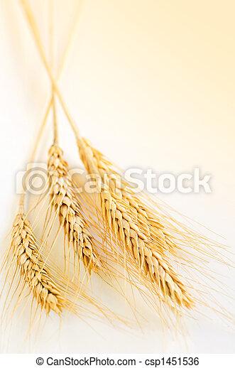 Wheat ears - csp1451536