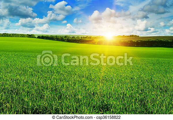 wheat field and sunrise in the blue sky - csp36158822