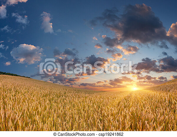 Wheat field at the summer sunrise - csp19241862