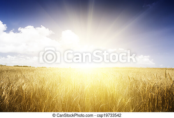 Wheat field on a Sunny day. - csp19733542