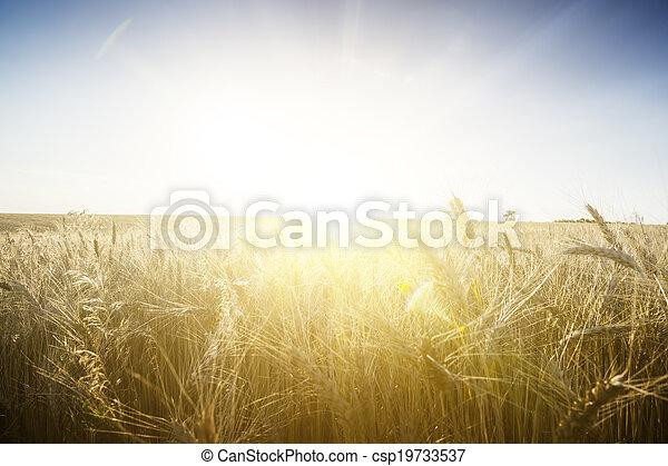 Wheat field on a Sunset. - csp19733537