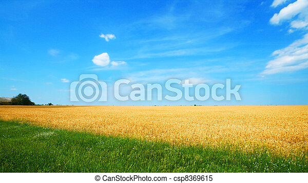 Wheat field - csp8369615