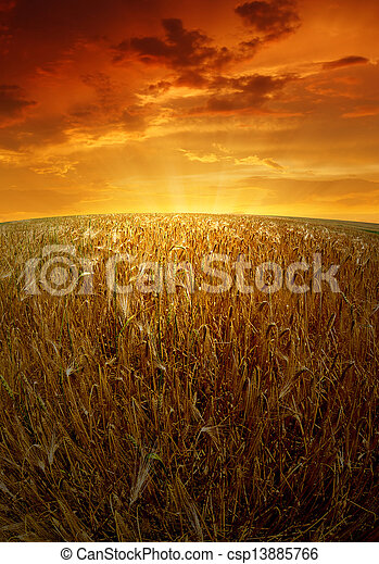 wheat fields  - csp13885766